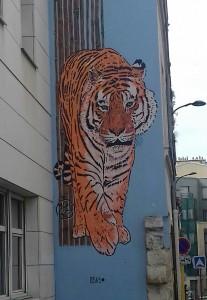 tigre street